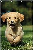 Wallario Garten-Poster Outdoor-Poster, Süßer Hund - Golden Retriever in Premiumqualität, für den Außeneinsatz geeignet
