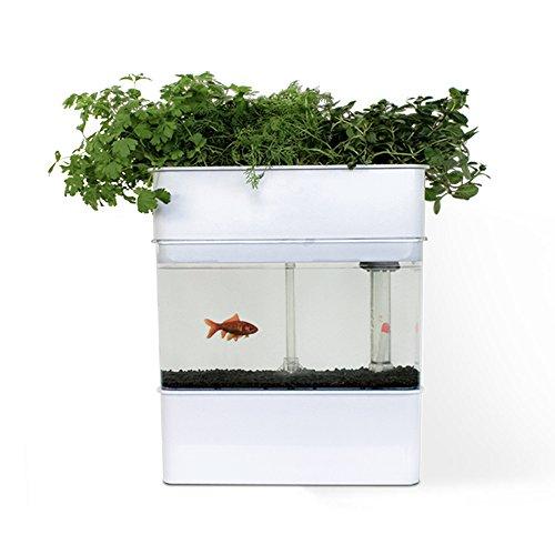 Sistema de Acuaponía Resetea para la cría de peces y cultivo de plantas
