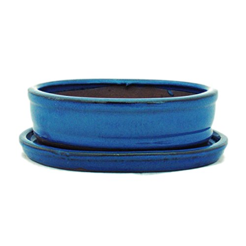 Bonsai pot avec soucoupes bleu taille 2-o7 modèle ovale-longueur : 15,5 cm-b 12 cm-hauteur : 4,5 cm