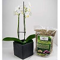 Moos für Pflanzen, wie Sphagnum für Orchideen, Bonsai Anzucht PREMIUM Pila Moss 125g