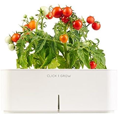 Click&Grow Starter Kit Mini Tomato Pianta Di Mini Pomodori
