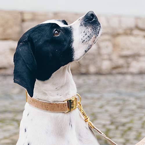 4 Nooks - Veganes Design Hundehalsband aus Baumwolle und Kork mit Gold, Größe S - 3