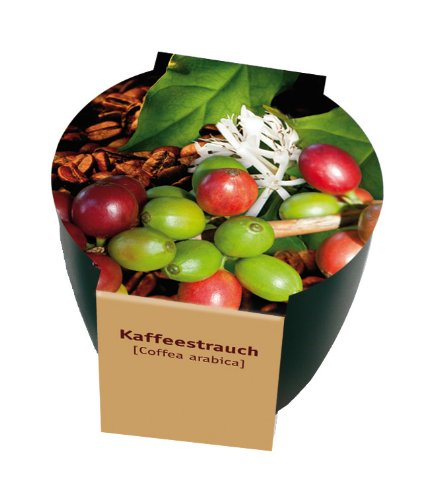 Premium-Pflanzset 'Kaffee'