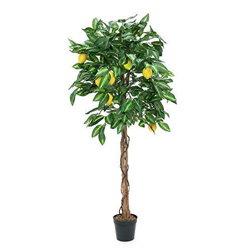 EUROPALMS Zitronenbaum, 150cm