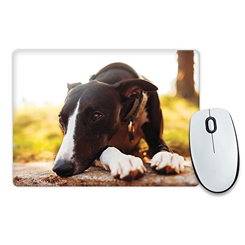 greyhound-dog-animal-tappetino-per-mouse-146