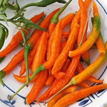 VISA STORE Orange Thai, Chili/Paprika-Pfeffer (Capsicum annuum) - 20 Samen, sehr selten!