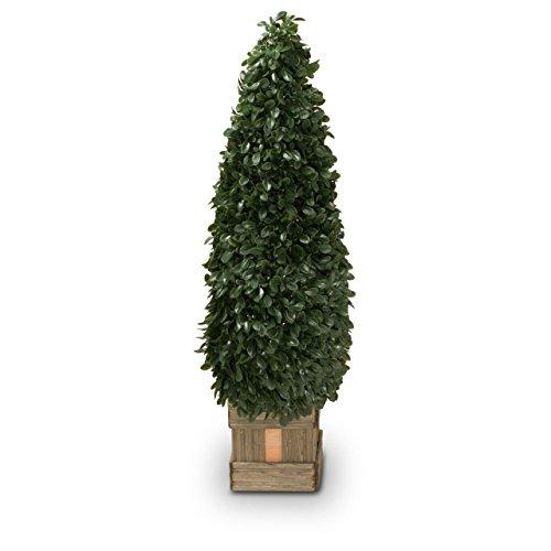 Buchsbaum Kunstpflanze ROBIN Kunstbaum, Buxbaum, künstlicher Buchsbaum mit Naturstamm in versch. Größen