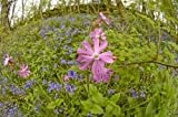 100% Wildflower seed partial shade/Hedgerows 45 grams. Native UK seed. Covers up to 30 square metres