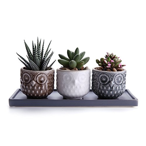 T4U 7cm Cerámico Patrón de Búho Suculento Maceta Cactus Flores Macetas Envase Plantas Juego a Todo Color con Bandeja Gris Conjunto de 3