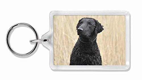 Curly Coat Retriever Hund Foto Schlüsselbund TierstrumpffüllerGeschenk (Curly Retriever Coat)
