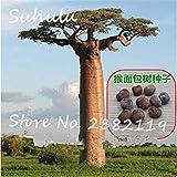 FERRY Semillas de Alto Crecimiento Solo no Las Plantas: Semillas Cushy-10 Semillas/Bolsa importada Baobab (Onia digitata) Seed s Outerdoor Semillas Bonsai Semillas orgánicas Crecen rápido 1