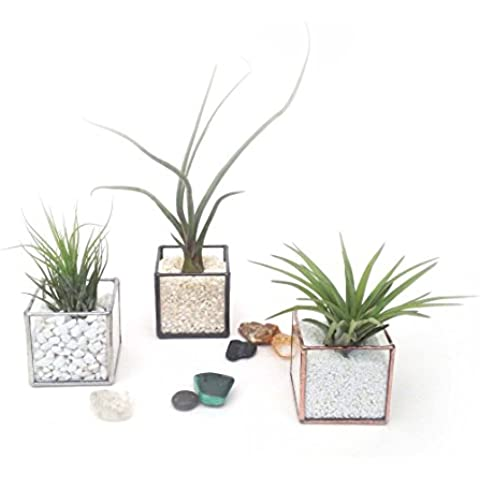 Cubo geometriche semplici piccole vetro terrario +