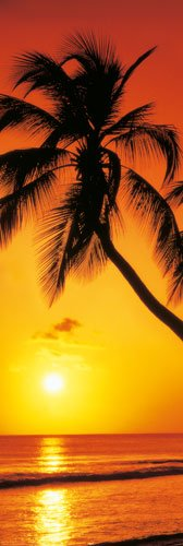 Riesen-Palme, Sonnenuntergang Tür-Poster Paradise-Beach Poster (62 cm x 21 cm (158 x 53 cm) -