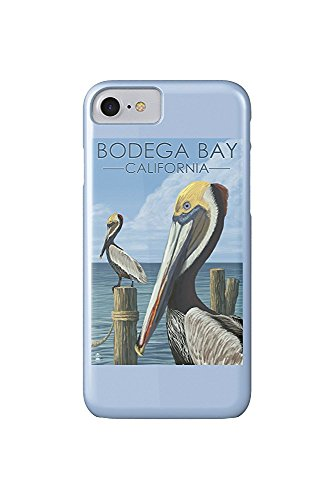 Bodega Bay, California - Brown Pellican (iPhone 7 Cell Phone Case, Slim Barely There)