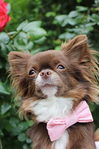 Hundehalsband mit Fliege/Schleife - Sommerliebe -