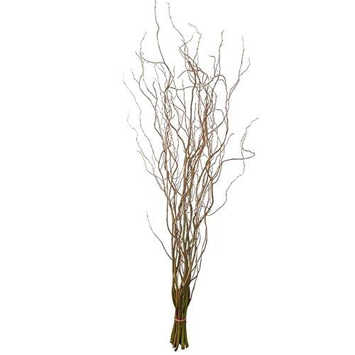 Die Beste Korkenzieherweide Zweige 6 Frisch Geerntete Dekozweige