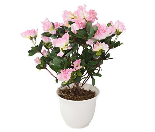 Azalee, Baum (Closer 2 nature C023D Künstliche Azalee 37 cm, rosa)