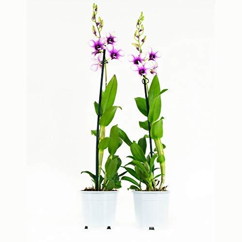 Botanicly
