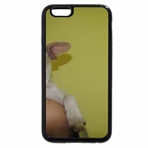 Case (Black) light tan chihuahua (Black Tan Chihuahua)