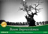 Baum Impressionen (Wandkalender 2020 DIN A3 quer): Unterwegs in deutschen Wäldern (Monatskalender, 14 Seiten ) (CALVENDO Natur) -