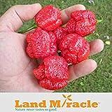 GEOPONICS Bonsai Pepe Seed, 20 semi / pacchetto, semi di Trinidad Scorpion Moruga Pepper * Hottest Pepper del mondo * Terra Miracolo # M446