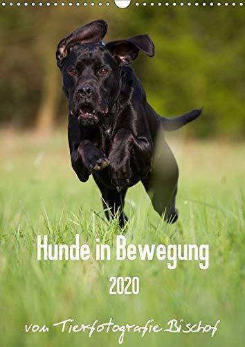 Hunde in Bewegung 2020 von Tierfotografie Bischof (Wandkalender 2020 DIN A3 hoch)