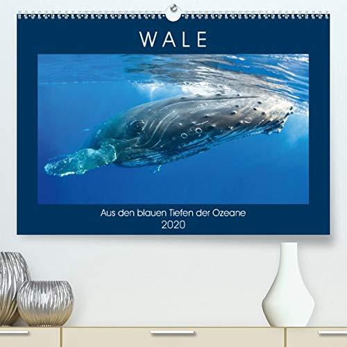 Calvendo Premium Kalender Wale: Aus den blauen Tiefen der Ozeane: Wale: Freiheit in den Tiefen der Meere (hochwertiger DIN A2 Wandkalender 2020, Kunstdruck in Hochglanz)