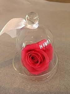 rose eternelle stabilis e rose saumon mini cloche verre. Black Bedroom Furniture Sets. Home Design Ideas