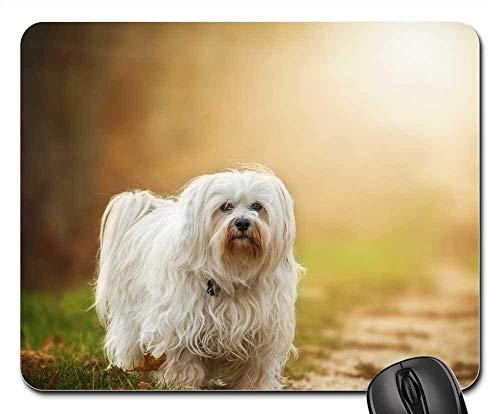 Mauspads - Hundeflackern Havanese Pet Outdoor Animal Small -