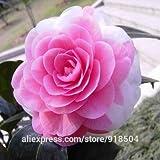 50 pezzi / bag, Semi di camelia, Camellia fiori semi 24kinds colore per ha scelto Deep Blue