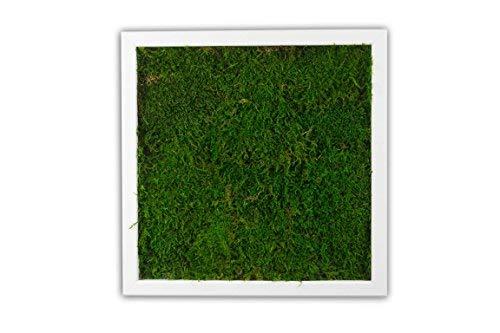 Moosbild Pflanzenbild Wandbild mit Flachmoos, versch. Maße günstig (100{00f051a63b3f8229af439312af00a21d683e9696f7bd1586dc329ec63901f960} Flachmoos) (Weiß, 35x35 cm)