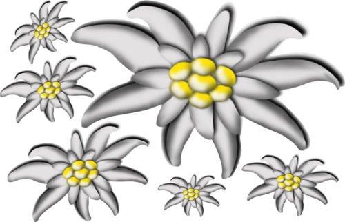 Designstudio Fritsche 6 x Blüten Edelweiss Patch Textil Velour Flock Aufbügler zum freien gestalten