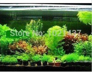Promotion 1500 Samen 15 Arten Aquarium Grassamen Wasser Wasserpflanze Samen DIY