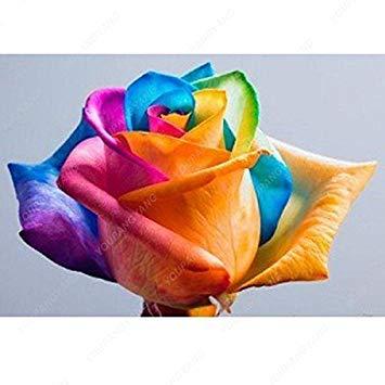 100pcs 20 sortes de graines Rose So Black Rose Charme Bonsai Graines de fleurs vivaces rares fleurs des plantes pour jardin gris clair