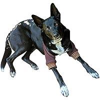 Manchon de récupération pour chien, protège-coudes
