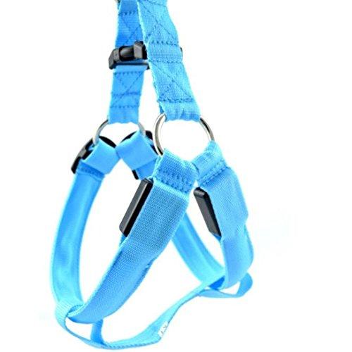 Hmeng LED Hundehalsband, Hunde Katze Welpen LED Nylon Hund Haustier Kragen Nacht Sicherheit Glow Halskette Blinkende Glitter Halsbänder (M, Blau)