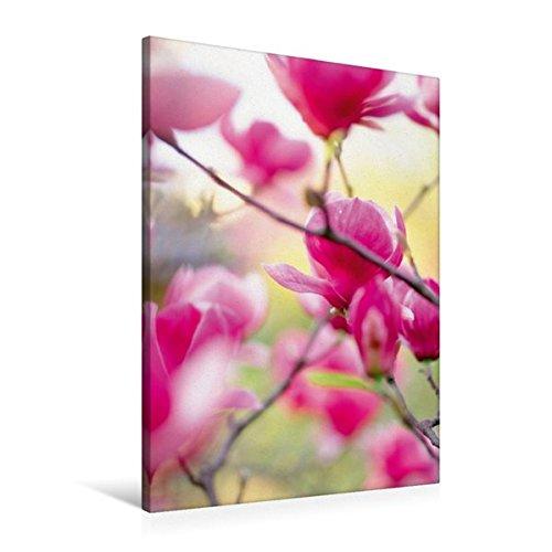 Premium Textile Toile de 30cm x 45cm Haute Rosée du matin–kräftige Rose Magnolia Fleurs, 60x90 cm por k.A. CALVENDO