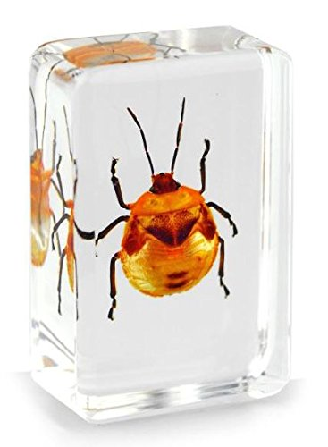 real-tea-seed-bug-camellia-flower-bug-insect-paperweight