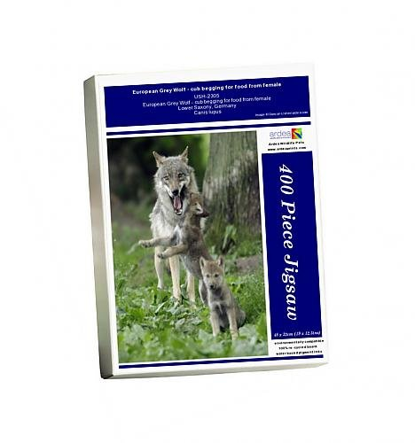 photo-jigsaw-puzzle-of-european-grey-wolf-cub-begging-for-food-from-female
