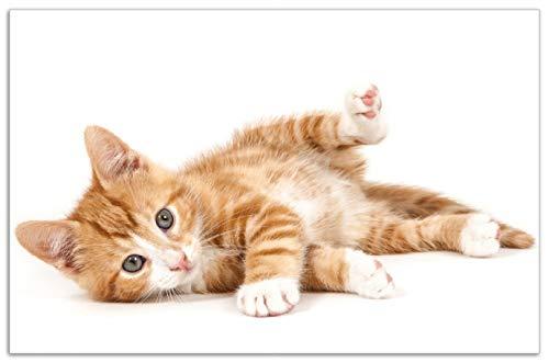 Wallario Herdabdeckplatte/Spritzschutz aus Glas, 1-teilig, 80x52cm, für Ceran- und Induktionsherde, Motiv Süße Katze mit großen Augen - rot weiß getigert -