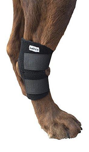 Labra Hund Hunde hinteren Bein Hock gemeinsame wickeln schützt Wunden wie sie heilen Kompression Klammer heilt große