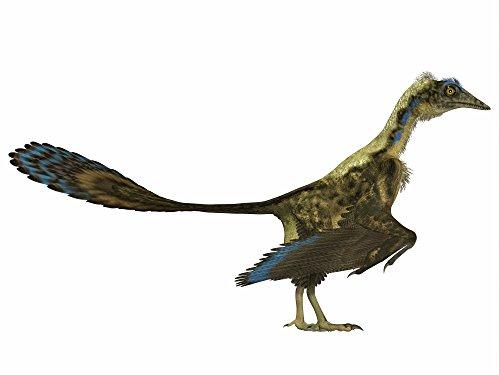 Corey Ford/Stocktrek Images – Archaeopteryx prehistoric bird. Photo Print (83,31 x 62,48 cm)