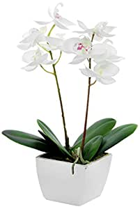 Country Baskets - Orchidea artificiale mini, in vaso, color panna