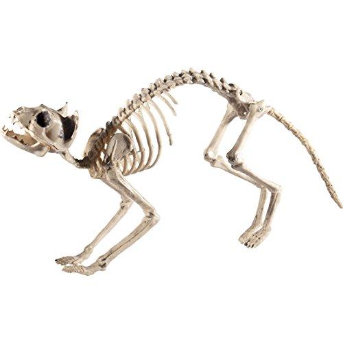 tze Katzenskelett Deko Knochen Dekofigur Hauskatze Halloweendeko Toter Kater (Skelette Halloween)