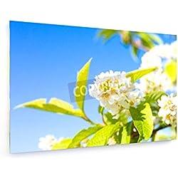 Kirschblüte - 30x20 cm - Leinwandbild auf Keilrahmen - Wand-Bild - Kunst, Gemälde, Foto, Bild auf Leinwand - Natur