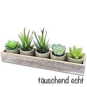 Moderne Wohnzimmer Deko, Kunstpflanzen mini 5er Set künstliche Sukkulenten im Topf mit Holzkiste. Dekopflanze, sehr gut verarbeitet und täuschend echt.