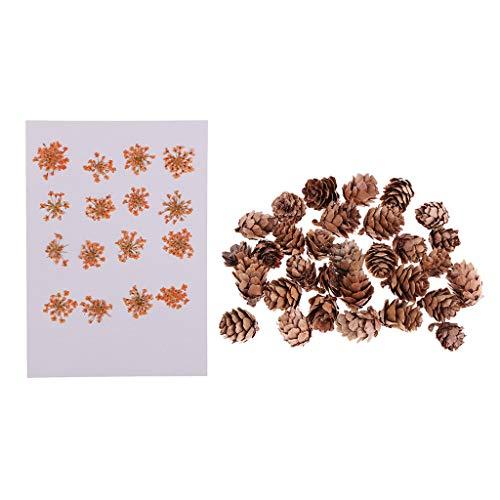 D DOLITY Frauen Lieblings-Familie Favorisiert Craft Verzierungen Pack Von 16x Dekorieren Gepressten Getrockneten Blumen + 30 Stü Natürliche Gemacht Tannenzap (Getrockneten Gepressten Blumen)