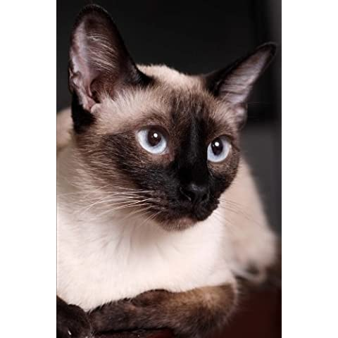 Siamese Cat Journal: Yes, I'm a Cool, Cool Cat. 150 Page Lined Notebook/Diary