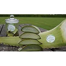 Bestes Bio Aloe Vera Blatt, 1428 mg/l Aloverose, 800-1100 g