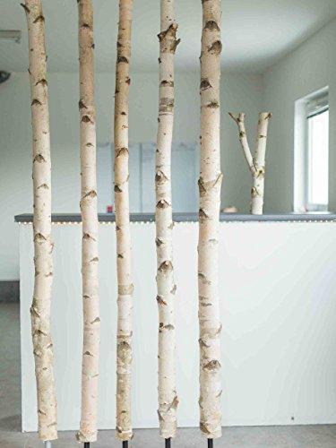 Weißer Birkenstamm mit Stellfuß getrocknet - 3 Meter Länge